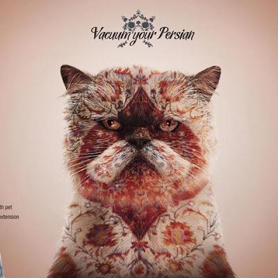 fotomontaje gato