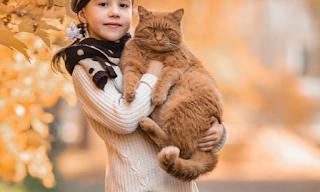 fakta kucing