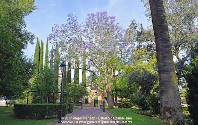 jacaranda mimosifolia, árboles, jardinería, jardines, flores, diseño jardines