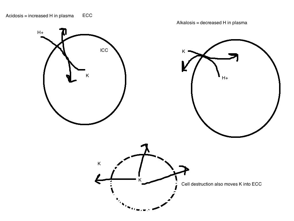 Almost-the-Last-part Acid Base Balance: Potassium, Acid