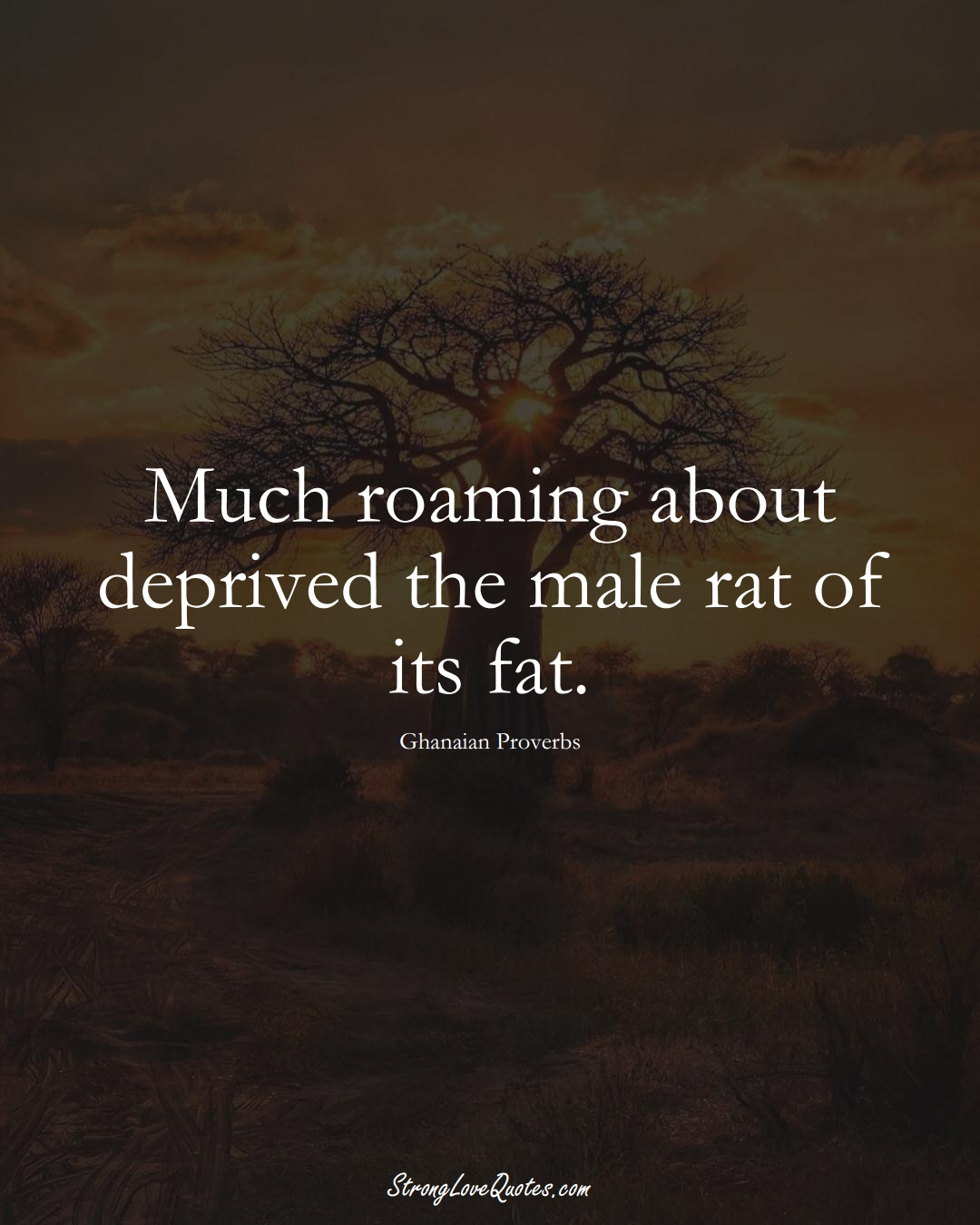 Much roaming about deprived the male rat of its fat. (Ghanaian Sayings);  #AfricanSayings
