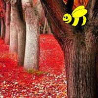 BigEscapeGames-BEG Autumn Fall Forest Escape