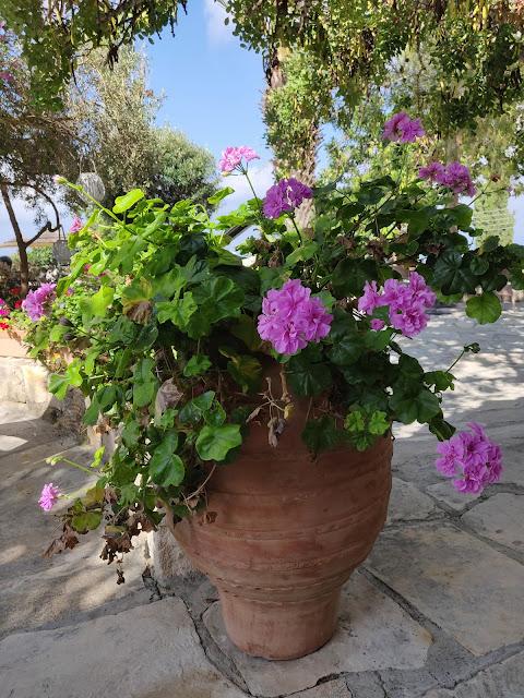 Greek urn with flowers