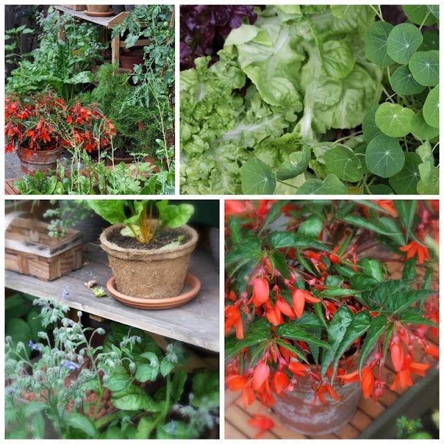 Daily Colours : The Mini Family Vegetable Garden