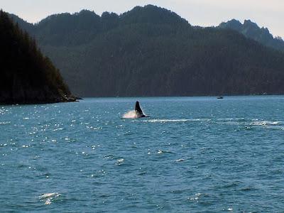 Humpback Whale Waved Goodbye