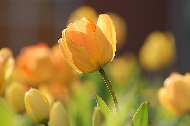 Light yellow-flower image