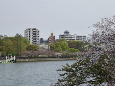 桜之宮公園の桜並木 大阪城