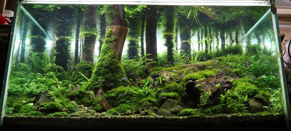 bố cục hồ thủy sinh phong cách rừng vô cùng đẹp mắt