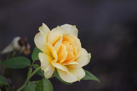 أحلى الورود ورق حائط 5