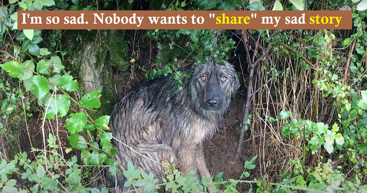 While driving to the Dog Rescue Shelter in Mladenovac, Serbia some shelter volunteers noticed a dog on the side of the road while he was standing alone within the rain.