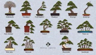 Berbagai gaya bonsai klasik 03