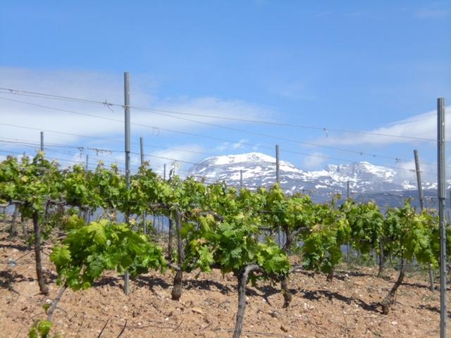 Wein aus Los Barrancos S.L. zum WeinWinter auf Langeoog