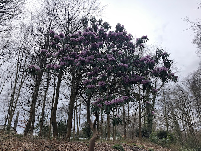 crooked tree with lilac blossom in wood against cloudy sky