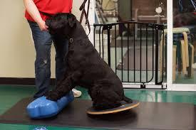 exercício com infláveis para cães