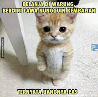 Foto kucing anak kucing oren lucu