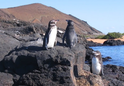 Warm-climate penguin fossils refute evolutionary conjectures about penguins. Creationists have a possible model for their post-Flood dispersal.