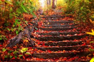 صور عن فصل الخريف