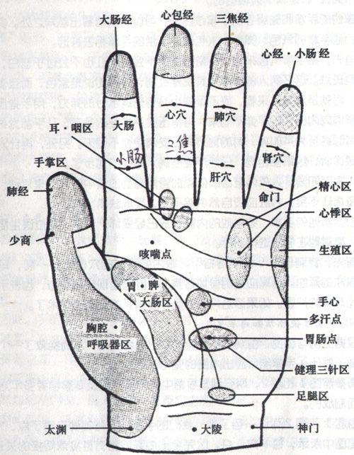 手掌反射區位置 - 手掌反射區圖解 | Source:jingluoxuewei.com/geboshoubu/511.html