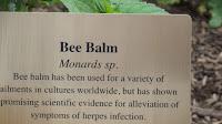 Bee balm properties, Medicine garden - Elizabeth Park, West Hartford, CT