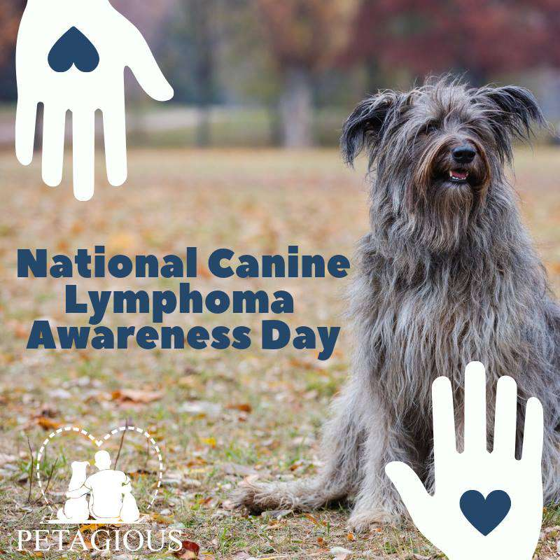 National Canine Lymphoma Awareness Day Wishes Photos