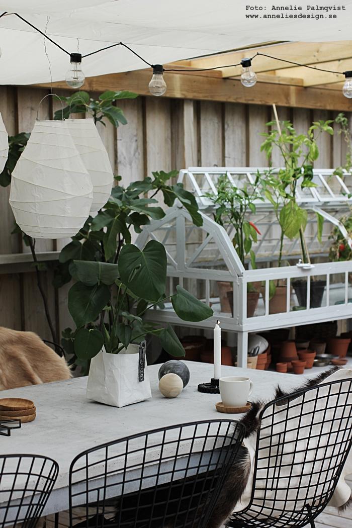 Oohh krukor, kruka, vit, vitt, vita, fikonträd, träd, fikoon, betong, betongbord, uteplats, trädäck, altan, matbord, fat av ek, glasunderlägg, getskinn, skinn, fäll, miniväxthus, växthus, annelies design, webbutik, webshop, inredning, uteplatsen, trädäcket, pergola, ljusslinga, panterna, lanternor, stolar, ljusstake, kugghjul, kaffe,