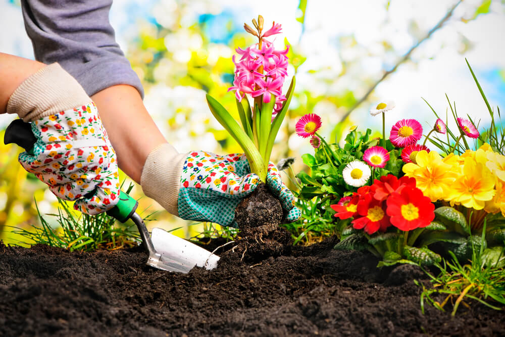 How to Improve and Care of the Flower Gardening?