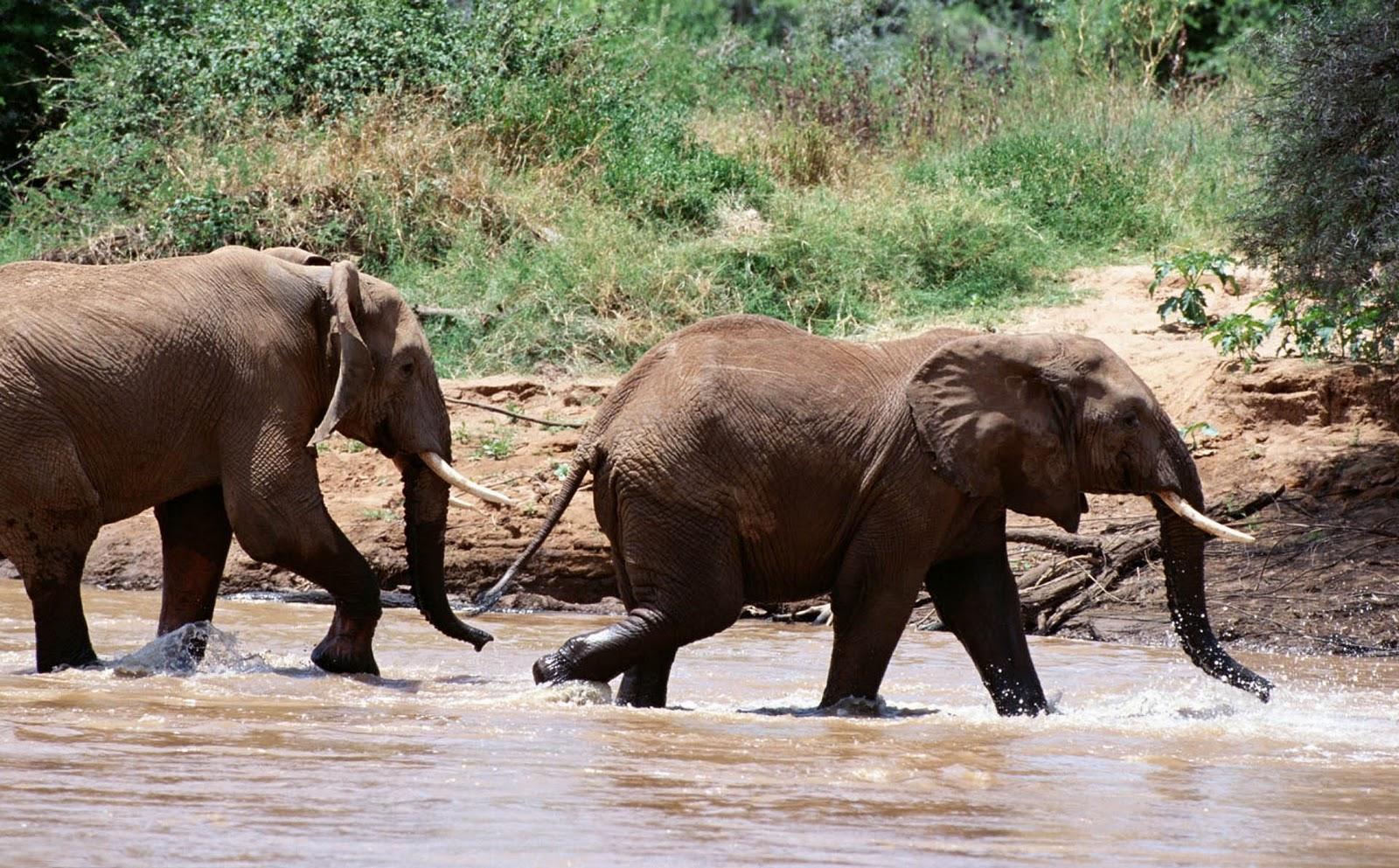 elephants wallpapers world - photo #27