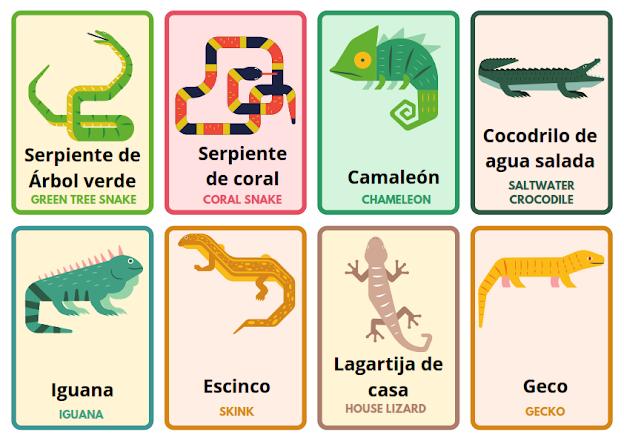 animals in Spanish, flashcards