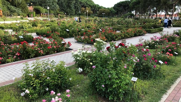 rosaleda-parque-oeste-madrid-que-ver