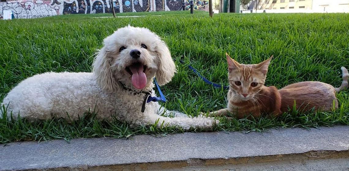 Cuidados de un perro en un recinto
