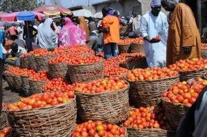 'Tomato Ebola' devastes Nigeria's tomato harvest