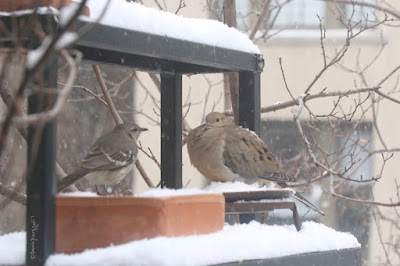 "The fourth bird-themed iimage in this post. This picture shows two birds standing on a garden shelf during a snowfall. A Northern mockingbird is on the left and a Mourning dove is on the right.  These bird types are featured in my book series, ""Words In Our Beak."" Info re my books is included within another post on this blog @ https://www.thelastleafgardener.com/2018/10/one-sheet-book-series-info.html"