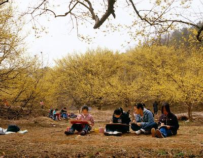 Penggemar Bunga Wajib Datang Ke Festival Ini Saat Musim Semi Korea