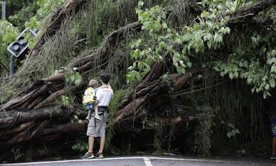 Chuva derrubou arvores em Ipanema