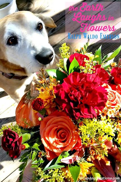senior hound dog smelling flowers