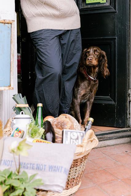 dog at shop door
