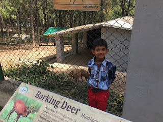 Zoo, Children
