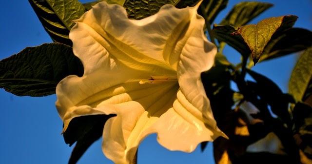 10 Macam Jenis Bunga Yang Bisa Dimakan Nomor 10 Ternyata Bisa Dimakan Loh Muhammad Iqbal Basri