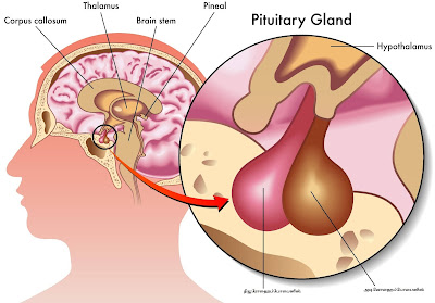 Pituitary Gland - Part - 3.
