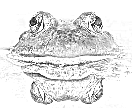 Poems: The Frog's Lament