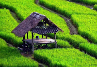 Pengertian Pertanian, Lingkup, Jenis, Bentuk, dan Manfaatnya