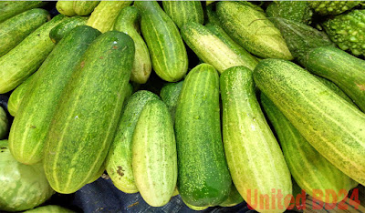 Hybrid Cucumber Seed Collection, Cultivation and Fertilizer Application