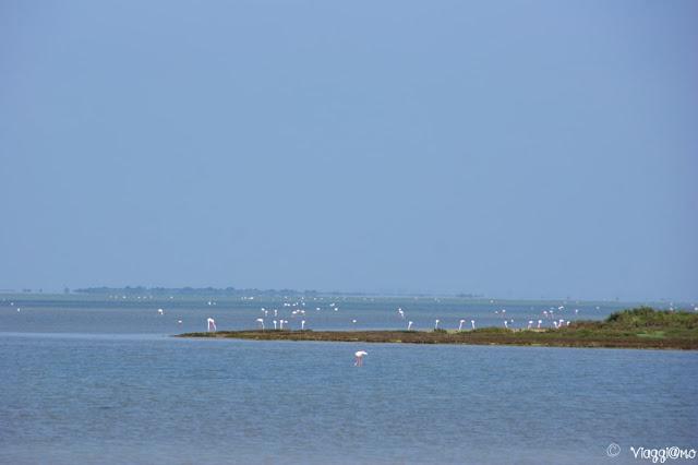 Panoramica del paesaggio della riserva della camargue