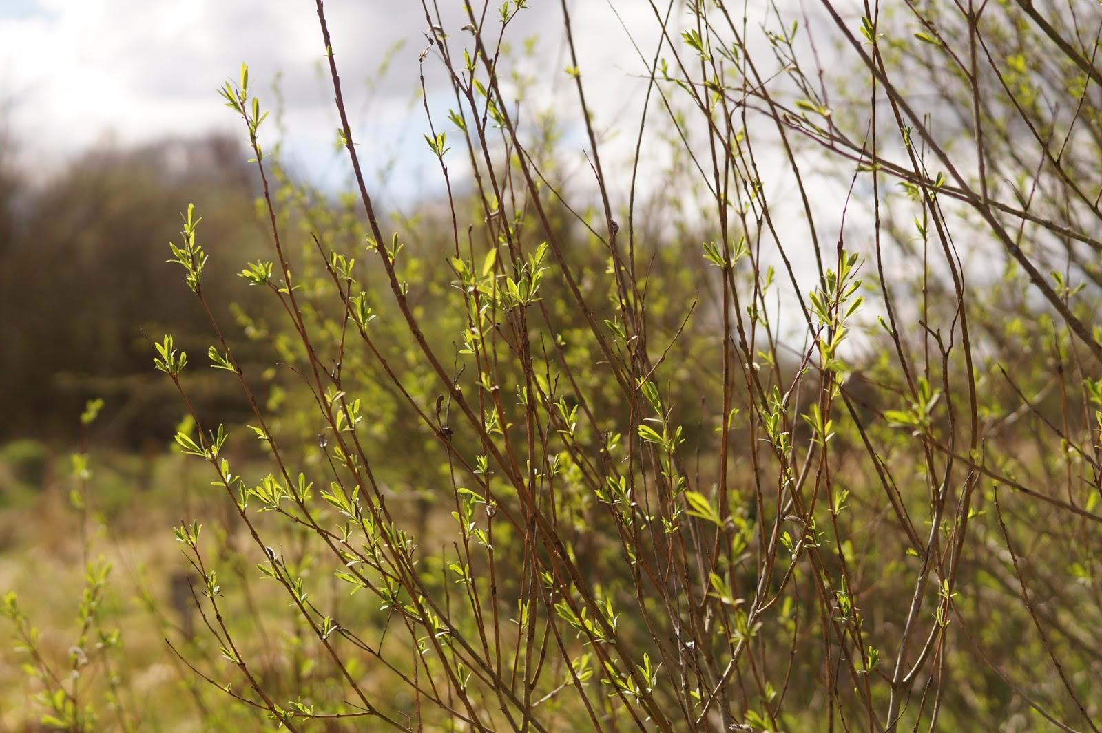 spring green three trees - photo #19