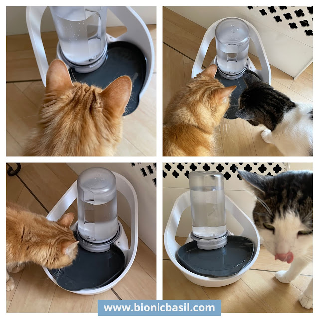 What's In The Box ©BionicBasil® The Sure Petcare Felaqua Connect Pet Fountain Melvyn and Fudge