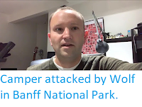 https://sciencythoughts.blogspot.com/2019/08/camper-attacked-by-wolf-in-banff.html
