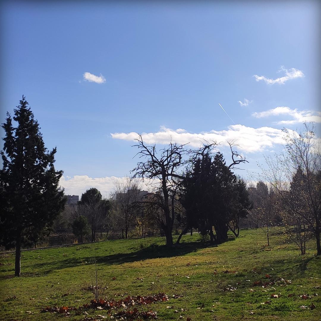 Paisaje árboles y cielo