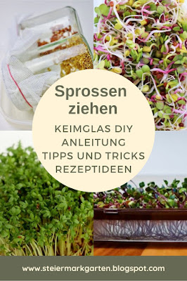 Sprossen-ziehen-Pin-Steiermarkgarten