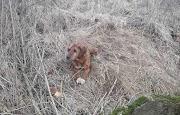 Videó: 10 méter mély kútba esett a kutyus Tiszalökön