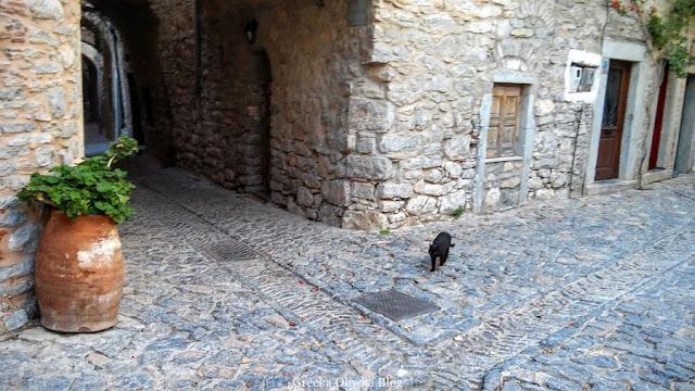 dzban z pelargonią, czarny kot na skrzyżowaniu wybrukowanych ulic, Mesta Chios Grecja
